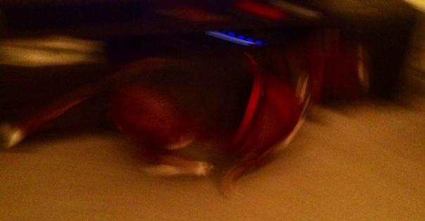 Bassett Blur!