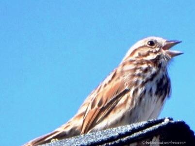 Sing, Songbird, Sing