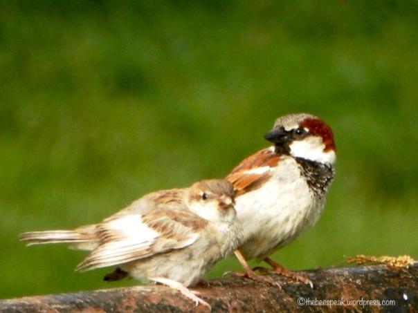 Baby and Poppa Bird